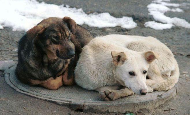 ВТатарстане предлагают ввести штраф заизгнание животных издома